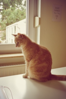 Was machst du da? Gar nicht so einfach zu fotografieren wenn dauernd die Katze durchs Bild läuft